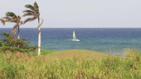 Palm trees on Caribbean island tropical paradise. Tropical ocean beach paradise vacation palm trees stock video footage