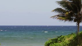 Palm trees on Caribbean island tropical paradise. Tropical ocean beach paradise vacation palm trees stock video