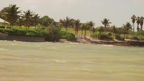 Palm trees on Caribbean island tropical paradise stock footage