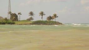 Palm trees on Caribbean island tropical paradise stock video