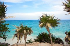 Palm trees by the Caribbean Sea Royalty Free Stock Images