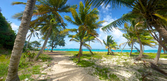 Palm Trees on Caribbean Shore Stock Images