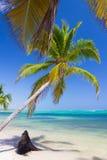 Palm trees on caribbean wild beach, Punta Cana Stock Photo