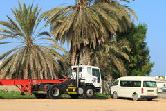 Palm trees and cars Stock Images