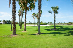 Palm trees cast shadow over golf course fairway Royalty Free Stock Images