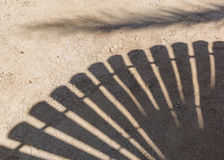 Palm trees cast shadows on the smooth golden sand Stock Photos