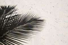 Palm trees cast shadows on the smooth golden sand of a remote tropical island beach in Dominicana republic Stock Image