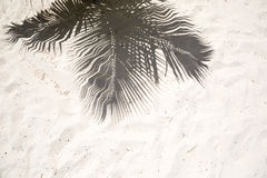 Palm trees cast shadows on the smooth golden sand of a remote tropical island beach in Dominicana republic Stock Images