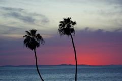 Palm trees with Catalina Island at sunset. Palm trees silhouette in front of Catalina Island, California at sunset royalty free stock photos