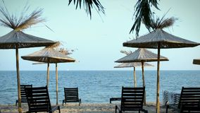 Palm trees and chaise-longue on the beach. Beach with palm trees and chaise-longue stock video footage