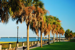Palm trees in Charleston Waterfront Park Stock Images
