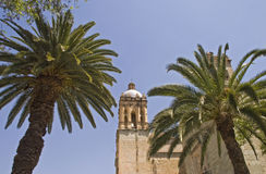 Palm trees with church tower Royalty Free Stock Photo