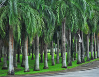 Palm trees in city park Stock Photo