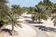 Palm Trees in a city park of Al Ain Royalty Free Stock Images