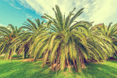 Palm trees in the city park. Stock Photos
