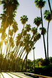 Palm trees at the city. Royalty Free Stock Photography