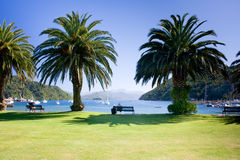 Palm trees on city waterfront. Picton waterfront on sunny day, Queen Charlotte sound, New Zealand stock photography