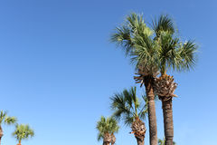 Palm Trees During Clear Day Royalty Free Stock Photo