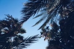 Palm trees at Cannes, France. stock photography