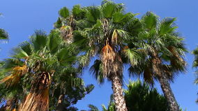 Palm trees on clear sky Royalty Free Stock Photo