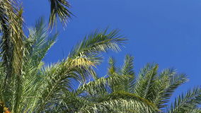 Palm trees on clear sky Stock Images
