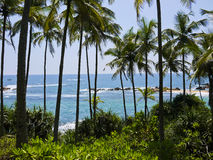 Palm trees close to Mirissa beach, Sri Lanka Royalty Free Stock Image