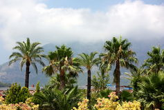 Palm trees and clouds. Landscape with by palm trees and clouds in the resort area Royalty Free Stock Photos