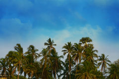 Palm Trees and clouds. A scenic set of Palm Trees with clouds stock photos