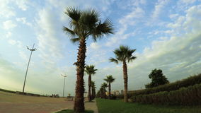 Palm trees with clouds on sea promenade. Embankment Batumi, Georgia with palm trees on background clouds stock video footage