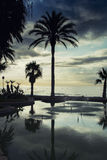 Palm trees, clouds and sunset Stock Images