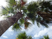 Palm trees and cloudy skies Stock Photography