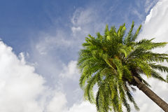 Palm Trees in the Cloudy Sky Stock Photo