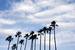 Palm trees at Cannes, France. stock photo