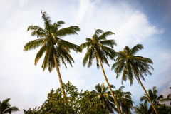 Palm trees on cloudy sky Royalty Free Stock Photography