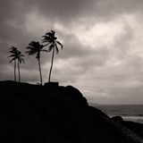 Palm trees on the coast. Group of palm trees on the sea coast, greyscale Royalty Free Stock Photos