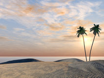 Palm trees on coast of ocean Stock Photo