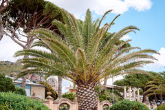 Palm trees on the coast Stock Images