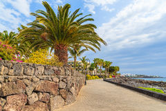 Palm trees on coastal promenade Royalty Free Stock Photography