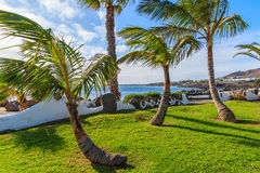 Palm trees on coastal promenade in Playa Blanca village Royalty Free Stock Images