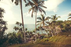Palm trees on coastline. Beautiful landscape in tropical climate. Ocean and wooden grove at sunny weather in Sri Lanka Royalty Free Stock Image