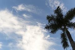 Palm trees coconut under blue sky Royalty Free Stock Image
