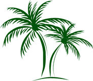 Palm trees with coconut on white backgr Royalty Free Stock Images