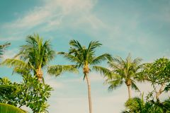 Palm trees coconut wood terrace beach sea sky in the summer. Of the holiday vintage toned Royalty Free Stock Images