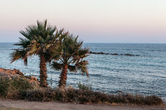 Palm trees on coean shore at sunset Stock Images