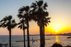 Palm trees on coean shore at sunset Royalty Free Stock Photography