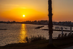 Palm trees on coean shore at sunset Stock Photography