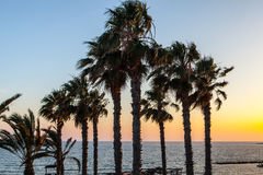 Palm trees on coean shore at sunset Royalty Free Stock Photo