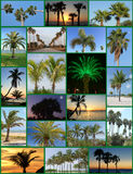 Palm Trees Collage Royalty Free Stock Photography