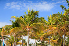 Palm Trees. Colorful palm trees near the beach Royalty Free Stock Photo