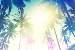 The Palm Trees Stock Photo